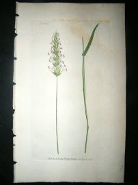 Curtis: 1804 Hand Col Botanical Print. Sweet Scented Vernal Grass 1